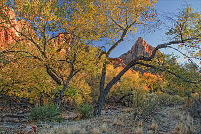 Photograph - Zion National Park by Utah Images