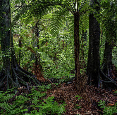 Photograph - Jungle by Les Cunliffe