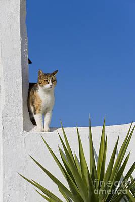 Cat On A Greek Island Art Print by Jean-Louis Klein & Marie-Luce Hubert