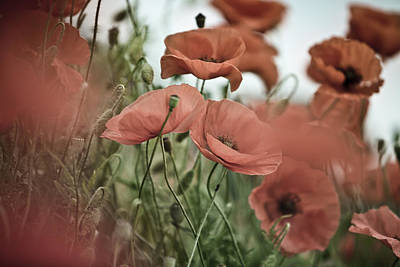Bright Photograph - Poppy Meadow by Nailia Schwarz