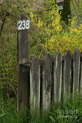 Photograph - 238 Wood Fence And Flowers by Loriannah Hespe