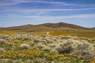Photograph - Antelope Valley Poppy Reserve by Beth Taylor