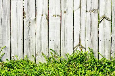 Fence Panels Art Print by Tom Gowanlock