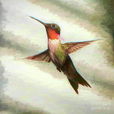 Photograph - Hummingbird by John Freidenberg