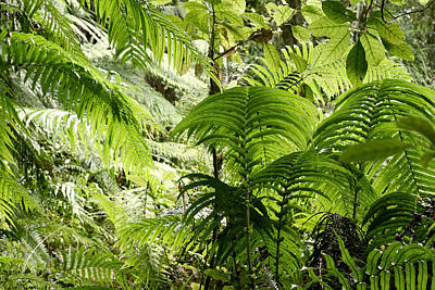Jungle Leaves Art Print by Les Cunliffe