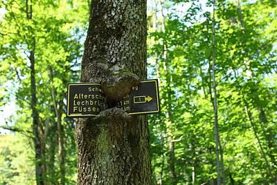 Wood Digital Art - Tree by Alice Kent