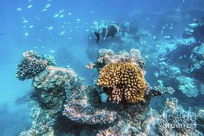 Sea Photograph - Underwater Coral Reef And Fish In Indian Ocean, Maldives. by Michal Bednarek