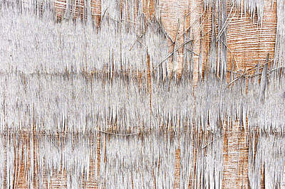 Plywood Photograph - Weathered Wood by Tom Gowanlock