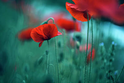 Wild Flowers Wall Art - Photograph - Poppy Meadow by Nailia Schwarz