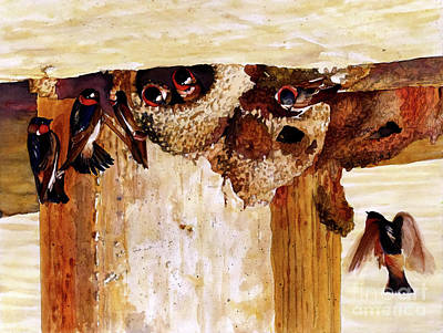 #250 Cliff Swallows Art Print by William Lum