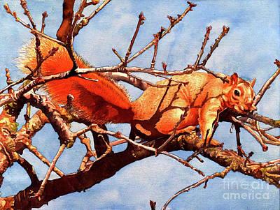 Squirrel Watercolor Painting - #251 Fox Squirrel by William Lum