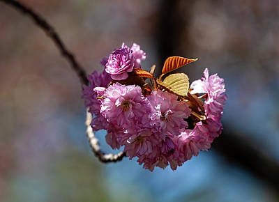 All You Need Is Love - Cherry Blossoms by Robert Ullmann