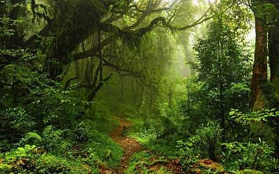 Liana Digital Art - 258259 Nature Trees Forest Leaves Lianas Mist Moss Path Plants Ferns Rainforest Jungles 748x468 by Anne Pool