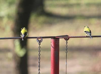 Yellow Digital Art - Bird by Super Lovely