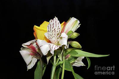 Photograph - Colorful Flowers by Elvira Ladocki