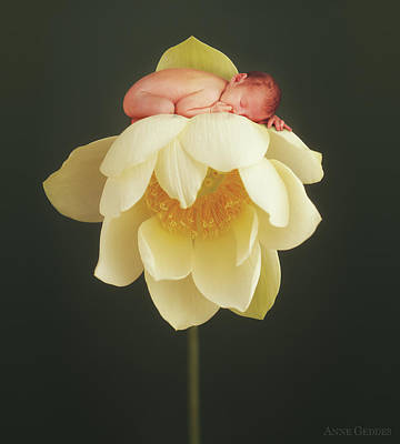 Lilies Photograph - Lotus Bud by Anne Geddes