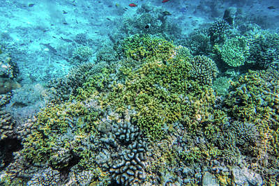 Photograph - Underwater Coral Reef And Fish In Indian Ocean, Maldives. by Michal Bednarek