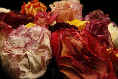 Photograph - Dried Roses by Avril Christophe