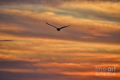 Photograph - 28- Seagull At Sunrise by Joseph Keane