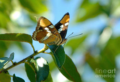 Butterfly Art Print by Marc Bittan