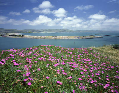 Photograph - 2a6106 Ice Plant Doran Beach Ca by Ed Cooper Photography