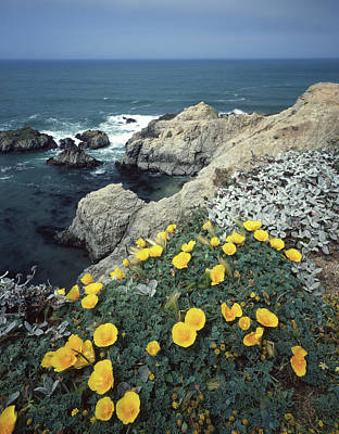 Photograph - 2a6107 Poppies On The California Coast by Ed Cooper Photography