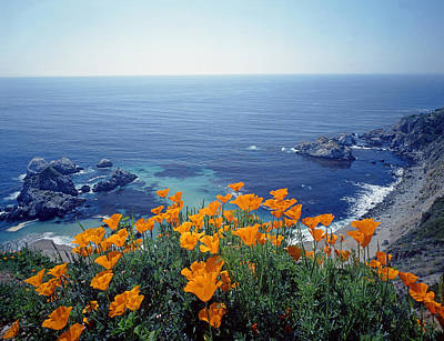 Photograph - 2a6219 California Poppies Along Big Sur Coast by Ed Cooper Photography