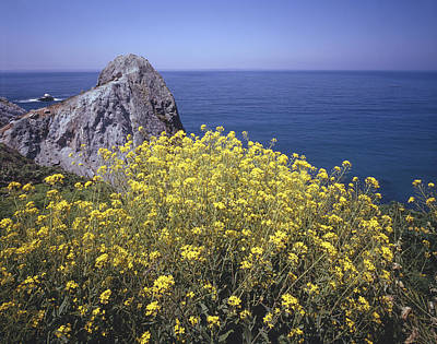 Photograph - 2a6220 Mustard Along Big Sur Coast by Ed Cooper Photography