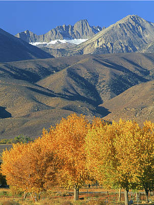 Photograph - 2a6762 Mt. Sill Palisade Crest In Autumn  by Ed  Cooper Photography