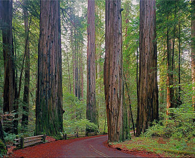 Photograph - 2b6391 Armstrong Redwoods Ca by Ed Cooper Photography