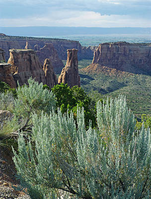 Owls - 2D10347-DC Sagebrush View by Ed  Cooper Photography