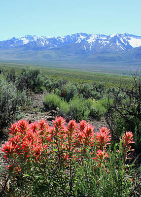 Photograph - 2da5921 Paintbrush With Steens Mountain by Ed Cooper Photography