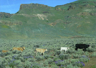 Photograph - 2da5946-dc Cattle On Steens Mountain by Ed Cooper Photography