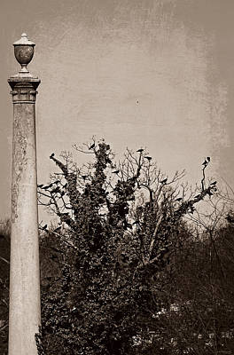 Photograph - 2nd Degree Murder by Brenda Conrad