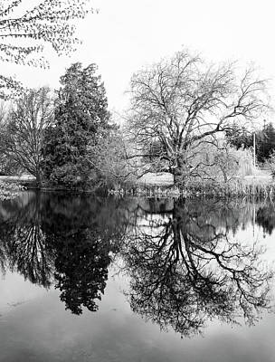 Photograph - Two Trees Reflected - Bw by Marilyn Wilson
