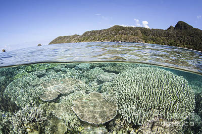 Stellar Interstellar - A Beautiful Coral Reef In Raja Ampat by Ethan Daniels