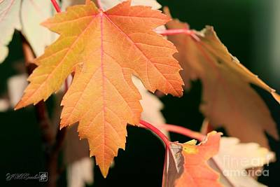 Photograph - A Hint Of Fall by J McCombie