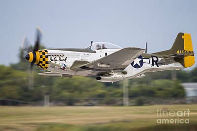 Landmarks Royalty Free Images - A P-51 Mustang Takes Off From Waukegan Royalty-Free Image by Rob Edgcumbe