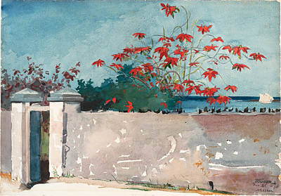 Winslow Homer Drawing - A Wall. Nassau by Winslow Homer