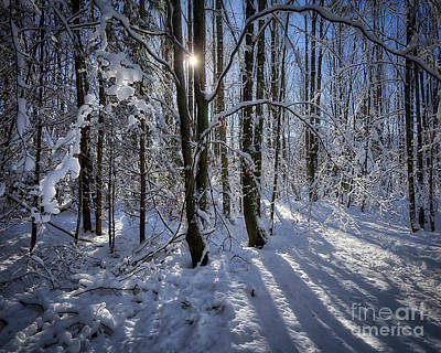 Photograph - A Winter's Tale by Edmund Nagele