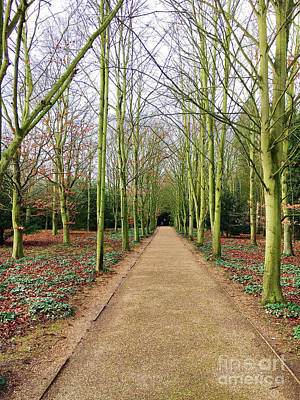 Photograph - A Woodland Path by Tom Gowanlock