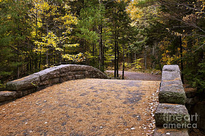 Carriage Road Photograph - Acadia National Park by John Greim