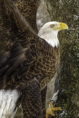 Lovely Lavender - American Bald Eagle by LeeAnn McLaneGoetz McLaneGoetzStudioLLCcom