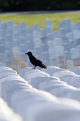 Photograph - American Crow Calverton New York by Bob Savage
