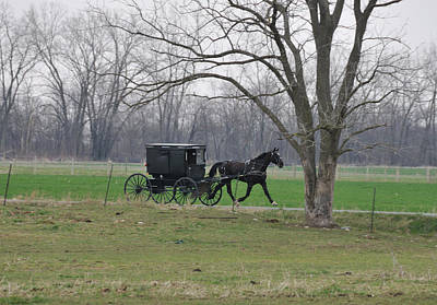 Amish Photograph - Amish Buggy by David Arment