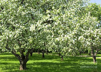 Photograph - Apple Garden by Irina Afonskaya