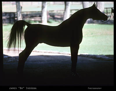 Horses Photograph - Arabian Horse Silhouette   by James BO  Insogna