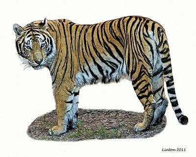 Asian Tiger Art Print by Larry Linton