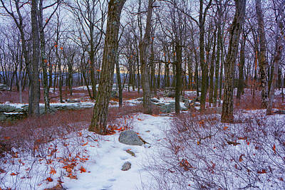 Photograph - At Harriman State Park by Raymond Salani III
