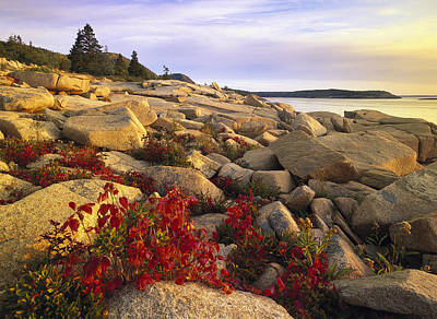 Atlantic Coast Near Thunder Hole Acadia Art Print by Tim Fitzharris